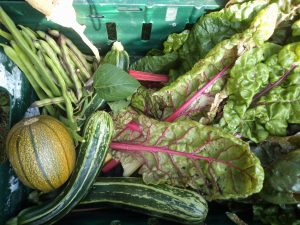 Seasonal harvest from GAP's GLAS Community Garden