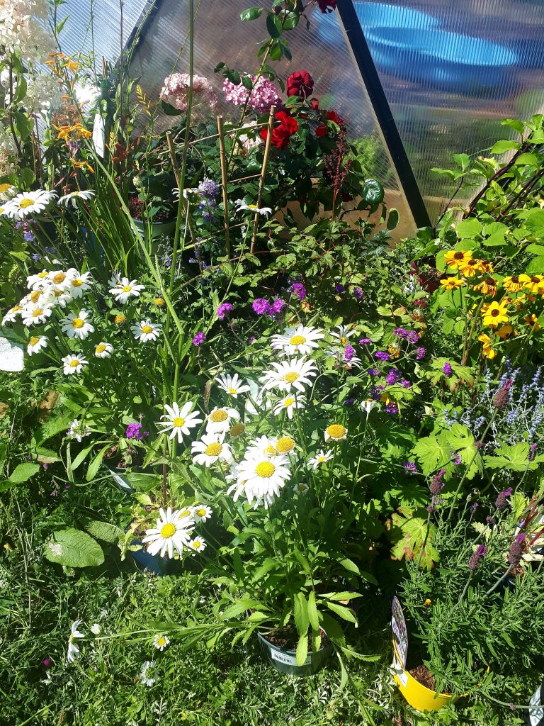 GAP's work since COVID-19 as featured in Centre for Global Education's journal Policy and Practice; a reflective piece looking back on our experience. Picture shows flowers growing in GAP's GLAS Community Garden in Ballymun